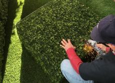 Grinding Hedges