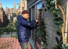 Bringing life to a vine