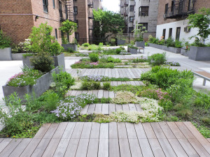 Simbiótica Living Roof, New York, NY