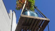 Tree Installation at the Skyline Arboretum